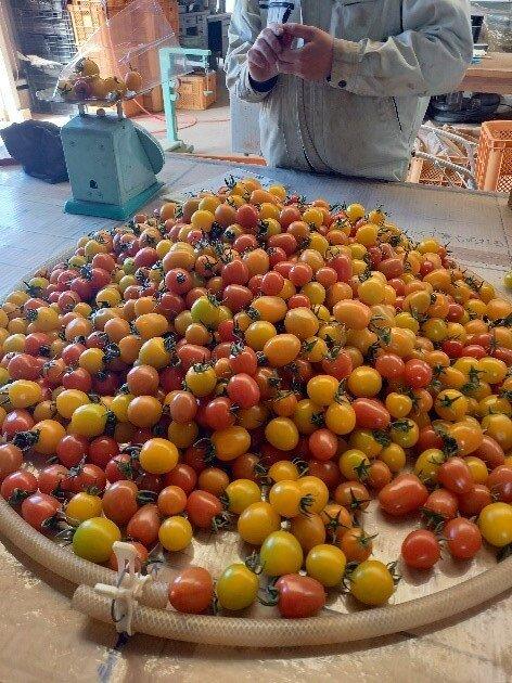 ミニトマト画像.jpg