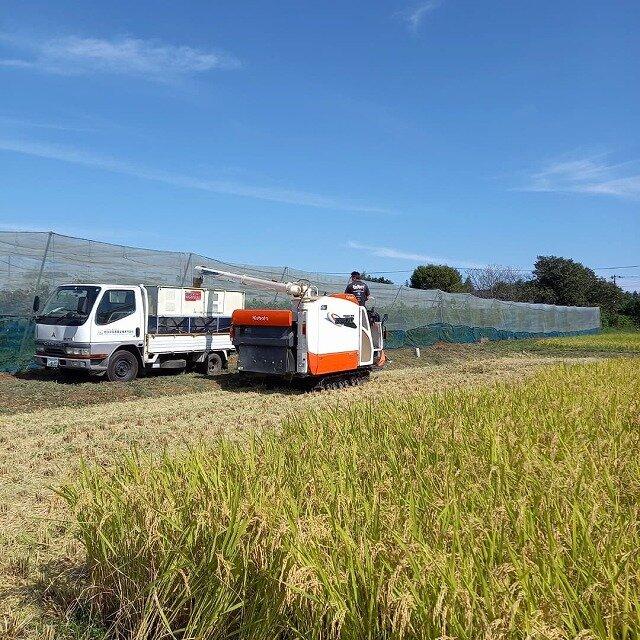 稲刈り―1.jpg